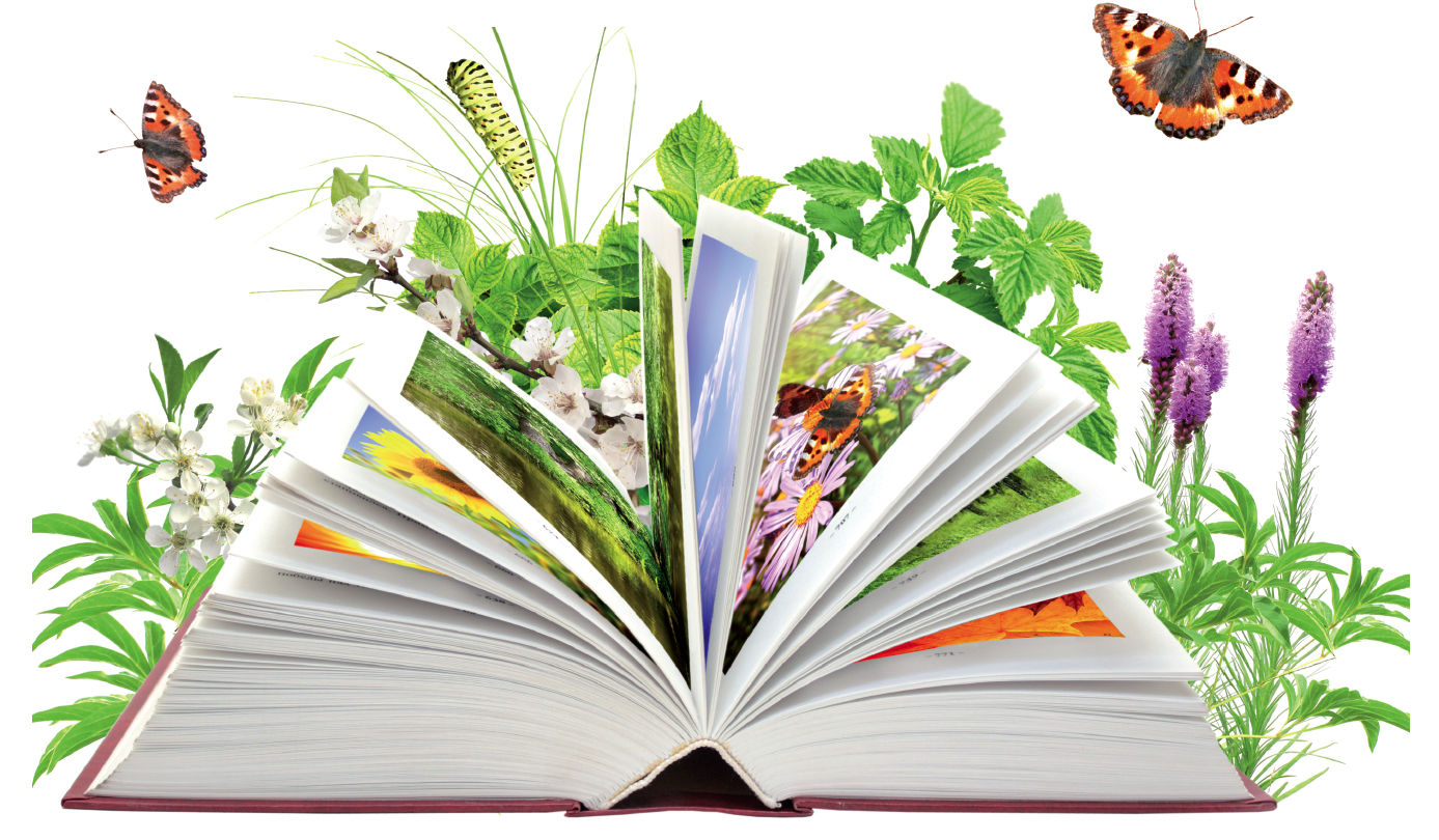 Libro abierto copia